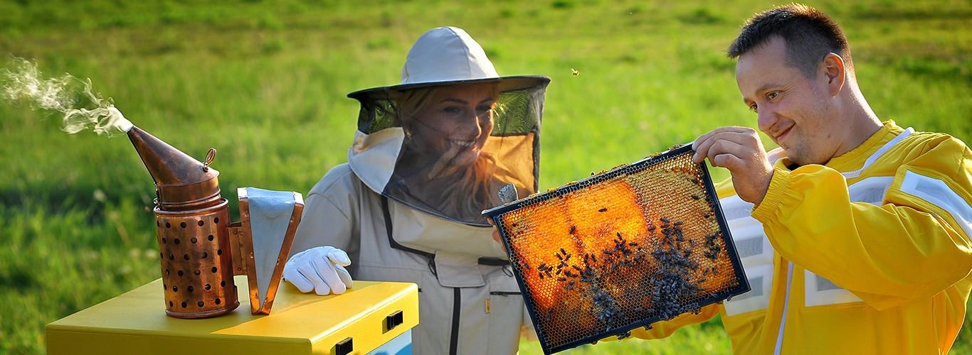 Pszczelarze w pasiece z ramką z pszczołami i podkurzaczem